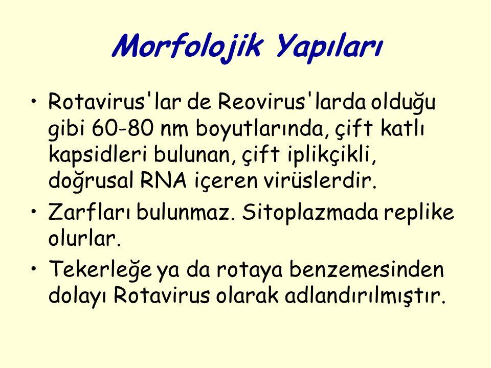 Morfolojik Yapıları Rotavirus'lar de Reovirus'larda olduğu gibi 60-80 nm boyutlarında, çift katlı kapsidleri bulunan, çift iplikçikli, doğrusal RNA iç