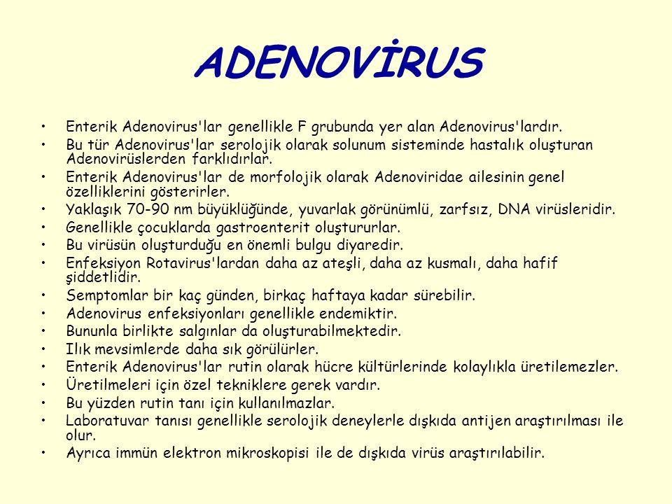 ADENOVİRUS Enterik Adenovirus'lar genellikle F grubunda yer alan Adenovirus'lardır. Bu tür Adenovirus'lar serolojik olarak solunum sisteminde hastalık