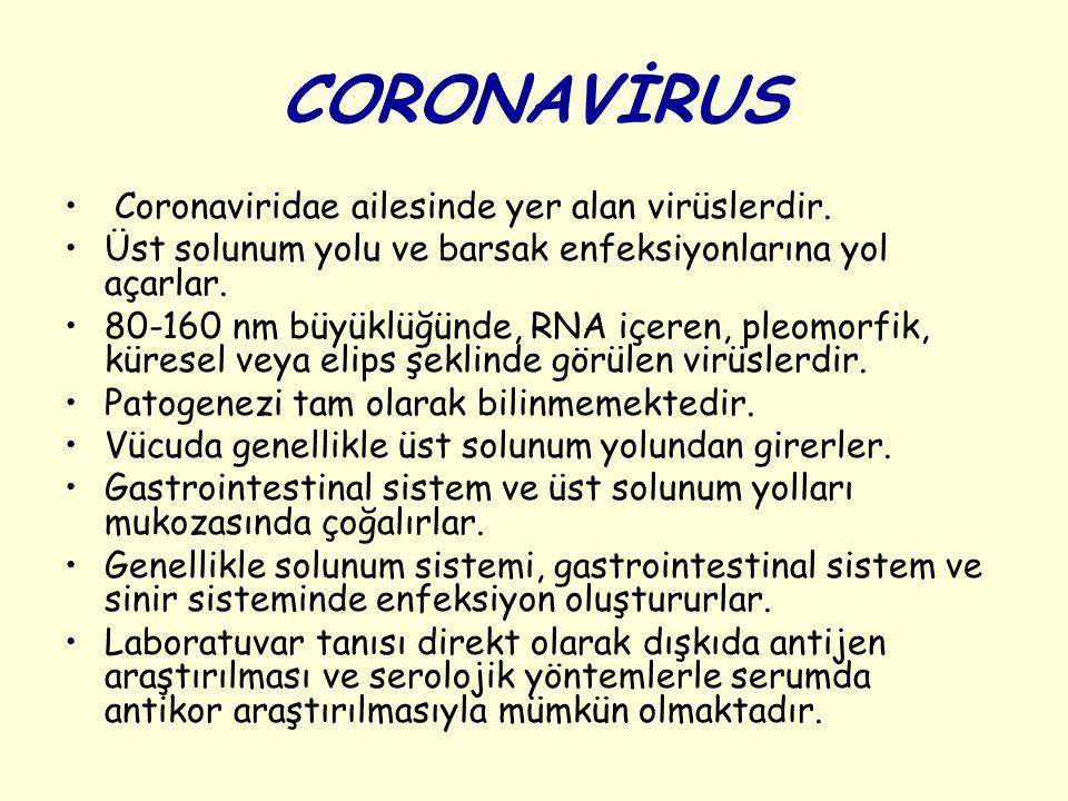 CORONAVİRUS Coronaviridae ailesinde yer alan virüslerdir. Üst solunum yolu ve barsak enfeksiyonlarına yol açarlar. 80-160 nm büyüklüğünde, RNA içeren,