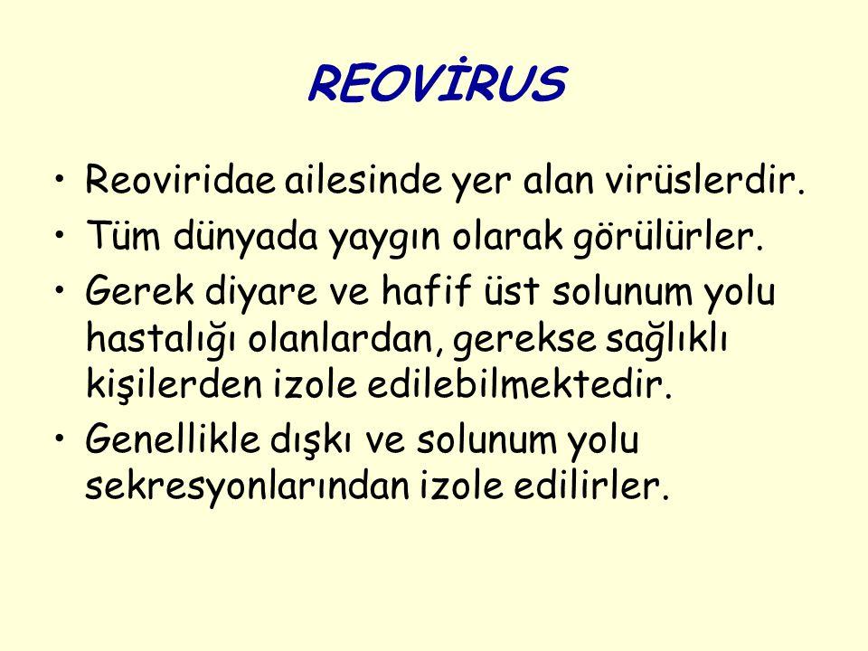 REOVİRUS Reoviridae ailesinde yer alan virüslerdir. Tüm dünyada yaygın olarak görülürler. Gerek diyare ve hafif üst solunum yolu hastalığı olanlardan,