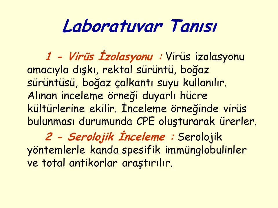 Epidemiyoloji Reovirus enfeksiyonları tüm yeryüzünde yaygın olarak görülür.