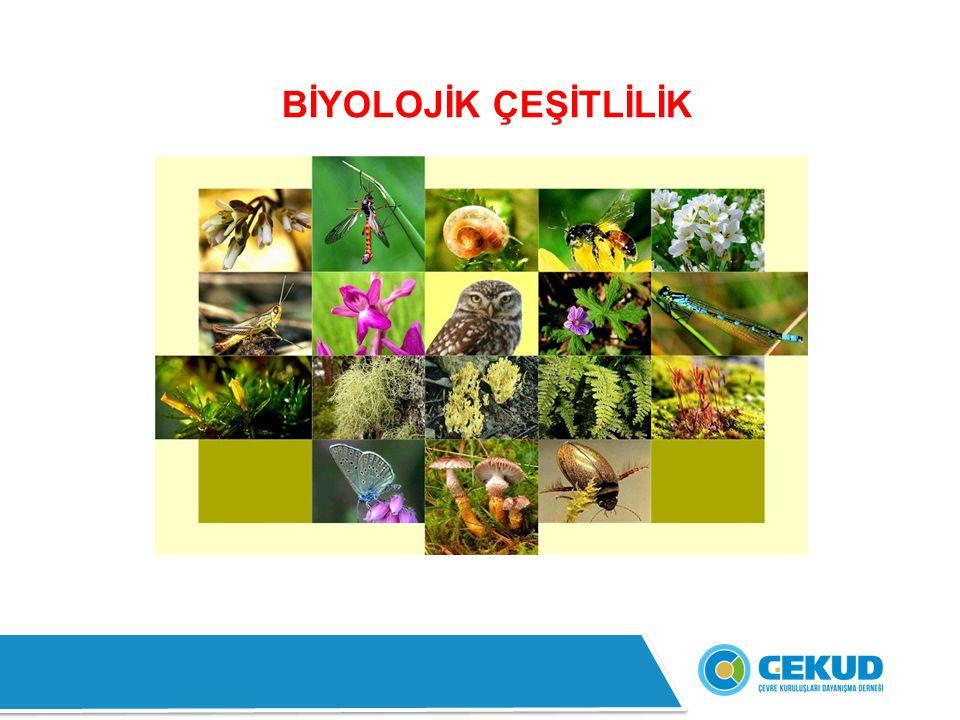 Türkiye'nin sahip olduğu yaklaşık 8.592 km'lik kıyı şeridinde (adalar hariç) yaklaşık 3.000 bitki ve hayvan türü yaşamaktadır.