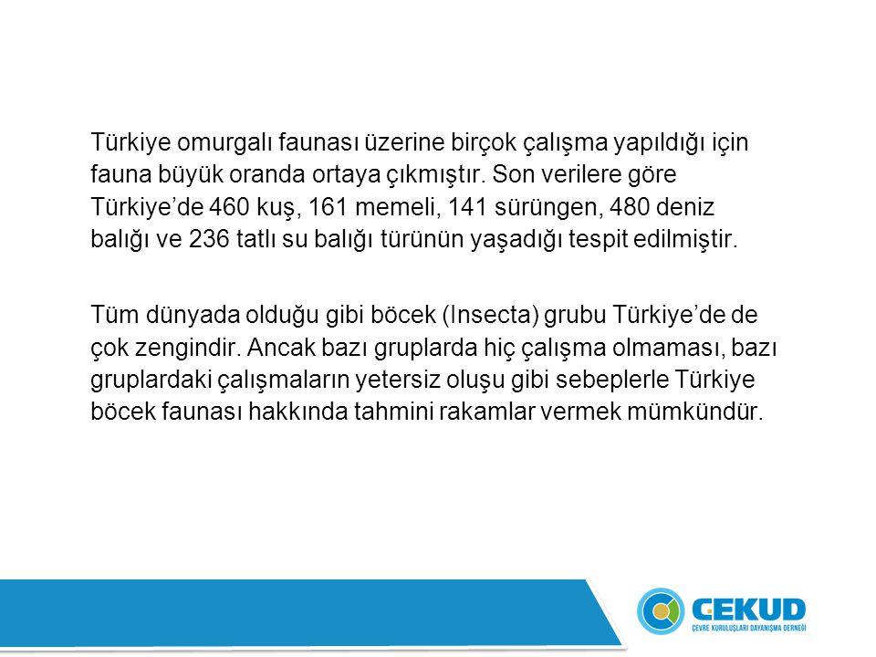 Türkiye omurgalı faunası üzerine birçok çalışma yapıldığı için fauna büyük oranda ortaya çıkmıştır. Son verilere göre Türkiye'de 460 kuş, 161 memeli,