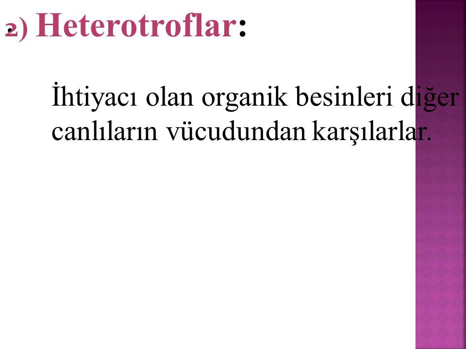 1)Ototrof Beslenen Canlılar İhtiyacı olan organik besinleri kendileri sentezleyebilen canlılardır.