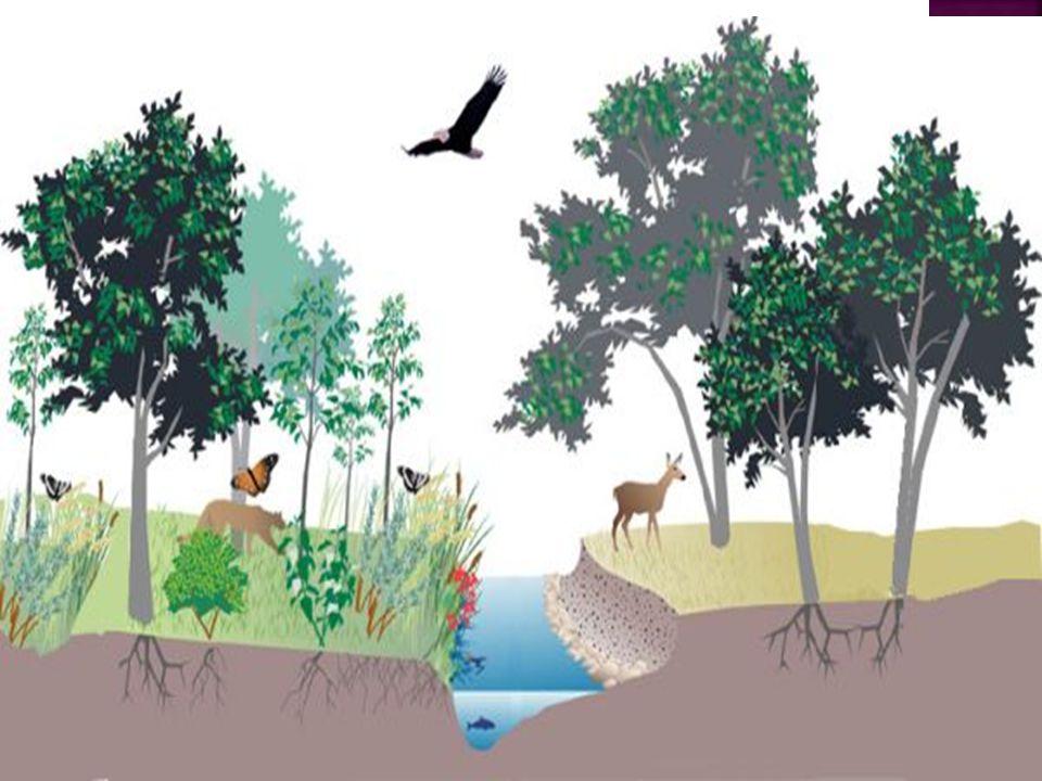  ADAPTASYON Bugün dünyada yaşayan tüm canlılar yaşadıkları çevreye uyum göstermişlerdir.