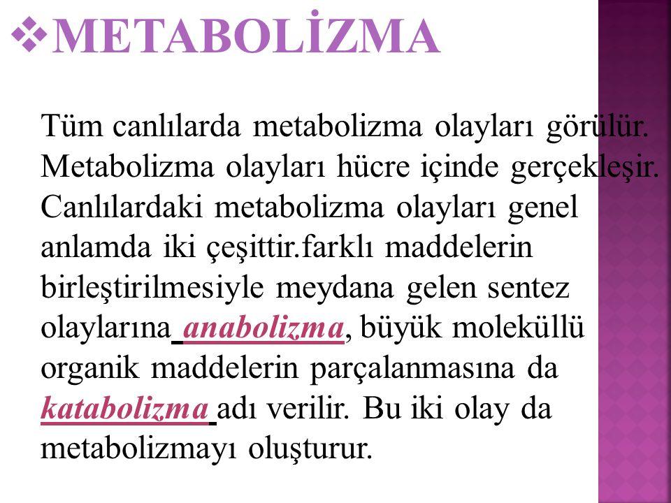  METABOLİZMA Tüm canlılarda metabolizma olayları görülür.