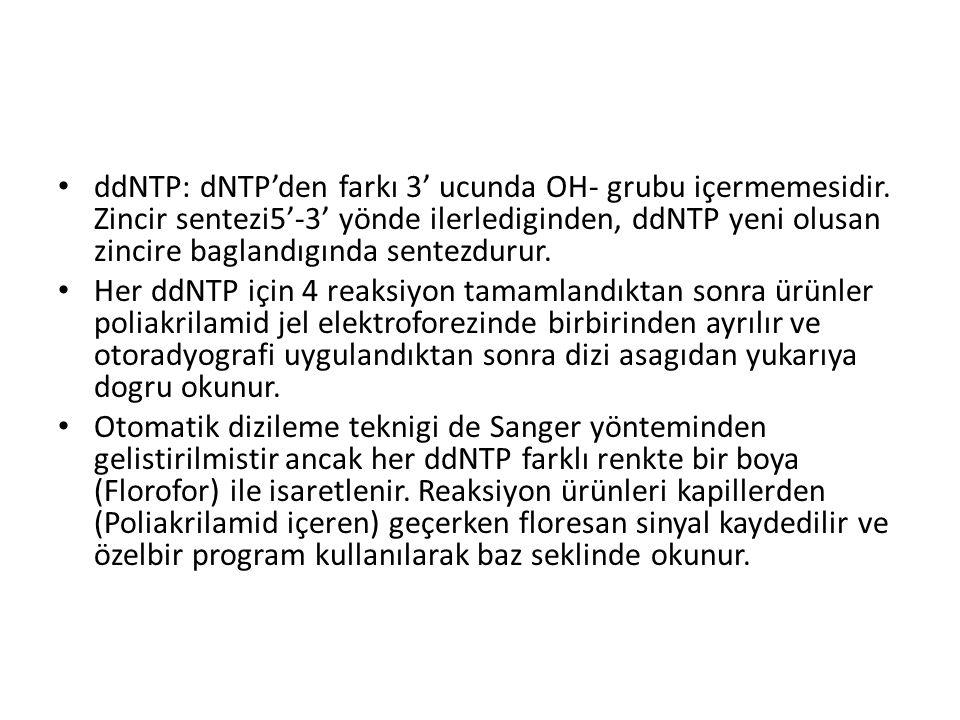 ddNTP: dNTP'den farkı 3' ucunda OH- grubu içermemesidir. Zincir sentezi5'-3' yönde ilerlediginden, ddNTP yeni olusan zincire baglandıgında sentezdurur