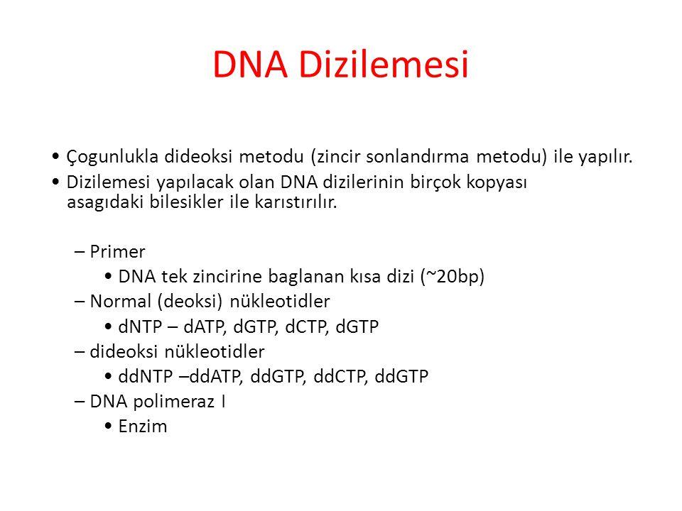 DNA Dizilemesi Çogunlukla dideoksi metodu (zincir sonlandırma metodu) ile yapılır. Dizilemesi yapılacak olan DNA dizilerinin birçok kopyası asagıdaki