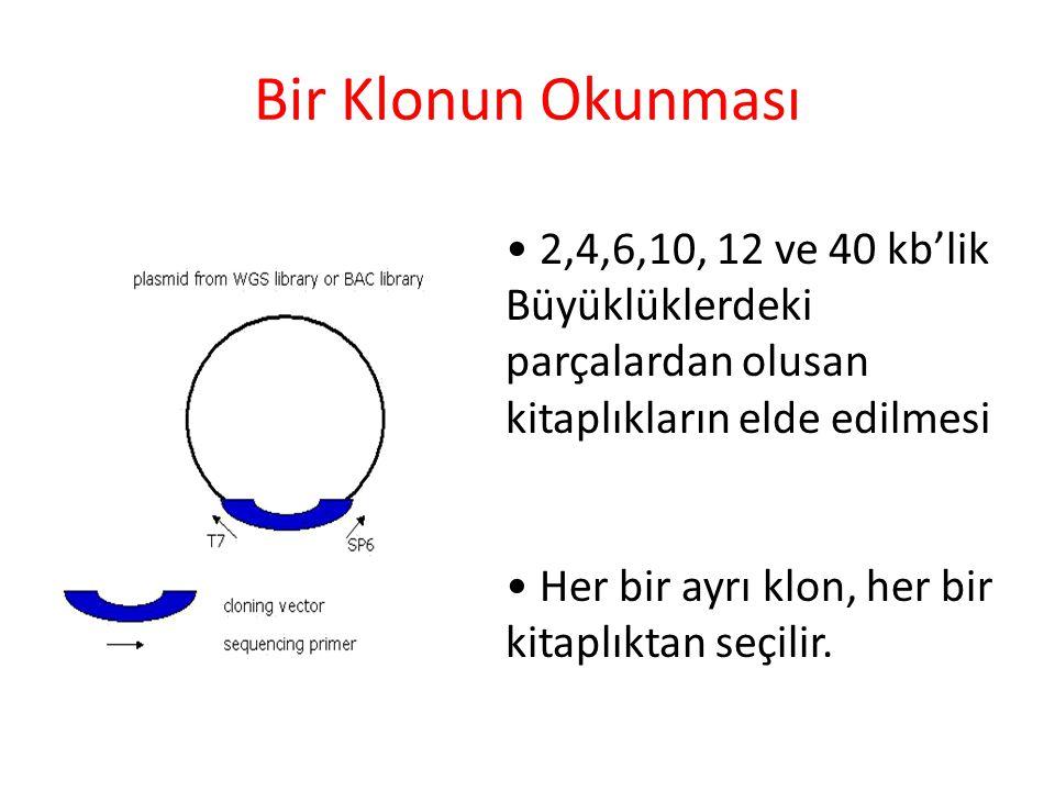 Bir Klonun Okunması 2,4,6,10, 12 ve 40 kb'lik Büyüklüklerdeki parçalardan olusan kitaplıkların elde edilmesi Her bir ayrı klon, her bir kitaplıktan se