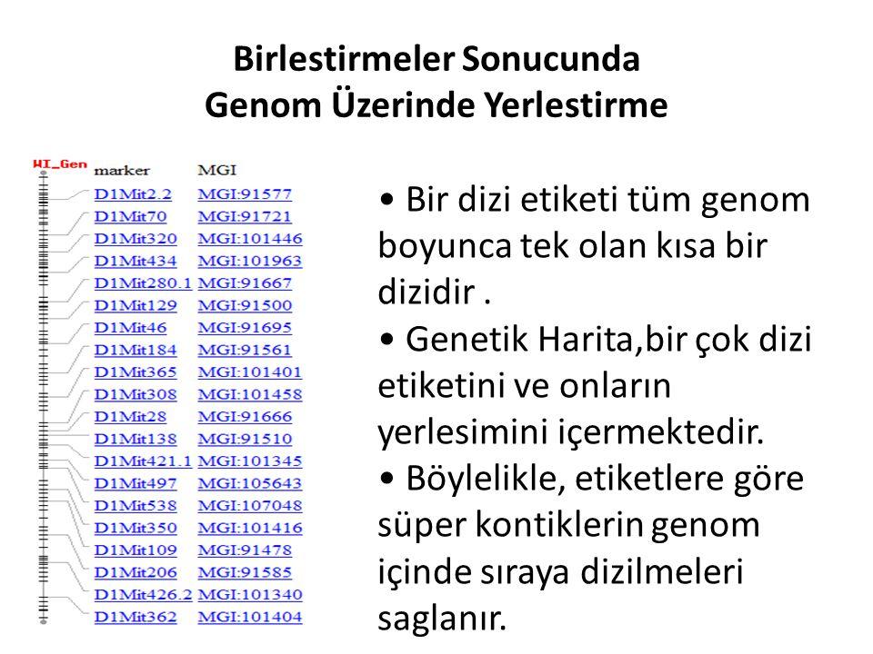 Birlestirmeler Sonucunda Genom Üzerinde Yerlestirme Bir dizi etiketi tüm genom boyunca tek olan kısa bir dizidir. Genetik Harita,bir çok dizi etiketin