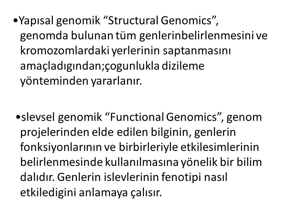 """Yapısal genomik """"Structural Genomics"""", genomda bulunan tüm genlerinbelirlenmesini ve kromozomlardaki yerlerinin saptanmasını amaçladıgından;çogunlukla"""