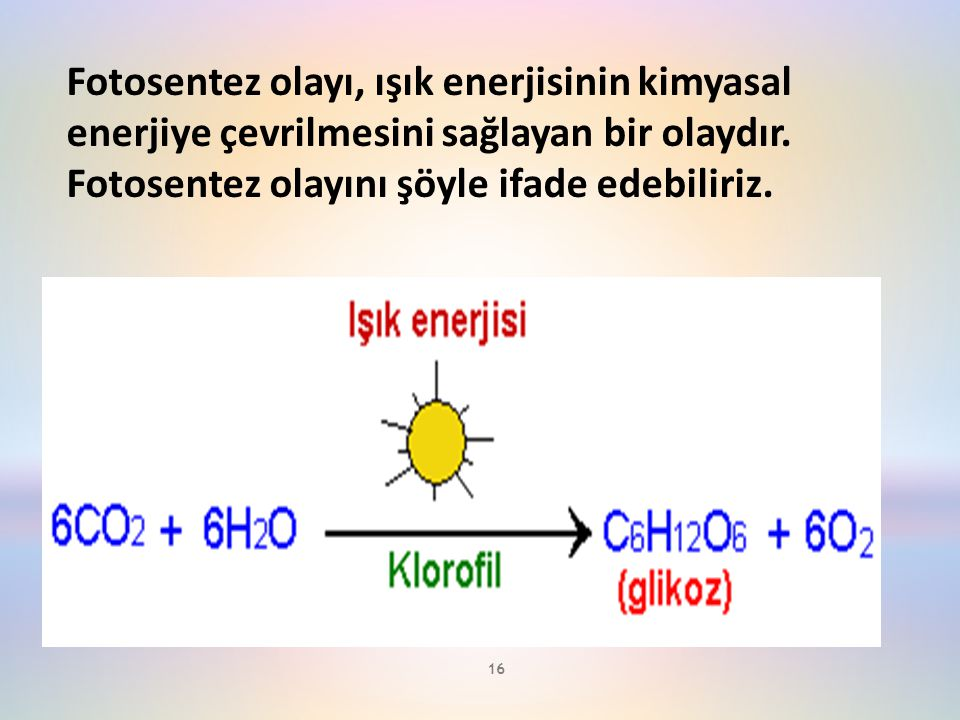 16 Fotosentez olayı, ışık enerjisinin kimyasal enerjiye çevrilmesini sağlayan bir olaydır. Fotosentez olayını şöyle ifade edebiliriz.