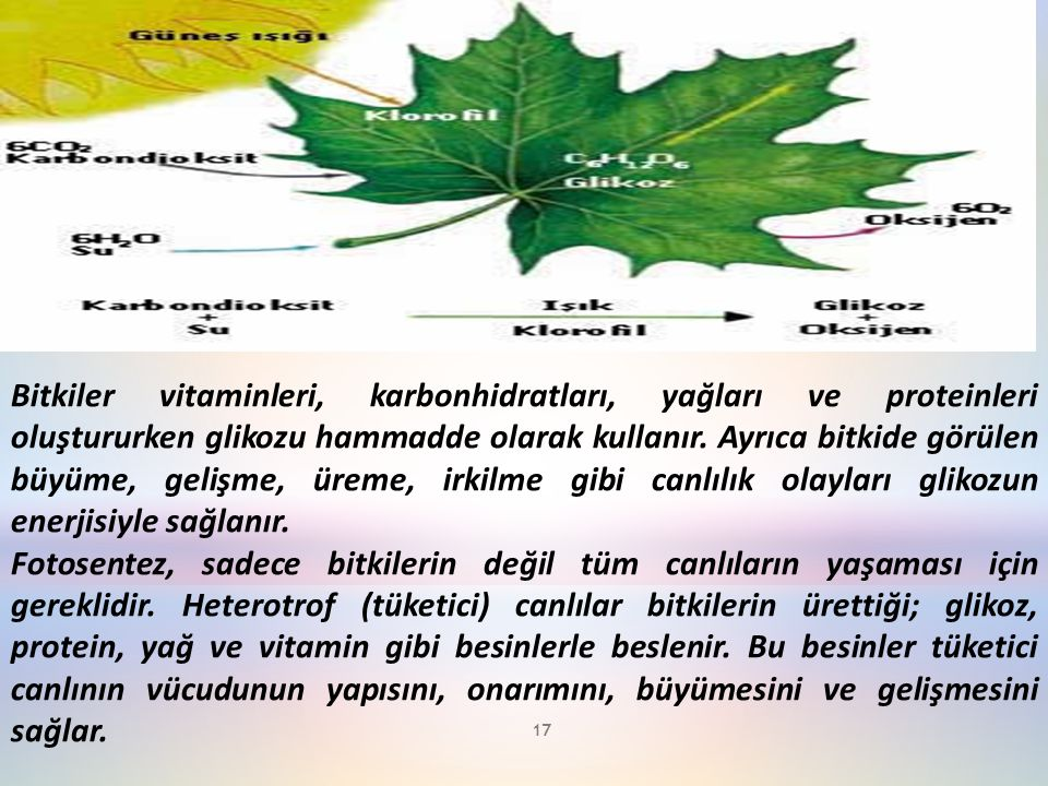 Bitkiler vitaminleri, karbonhidratları, yağları ve proteinleri oluştururken glikozu hammadde olarak kullanır.