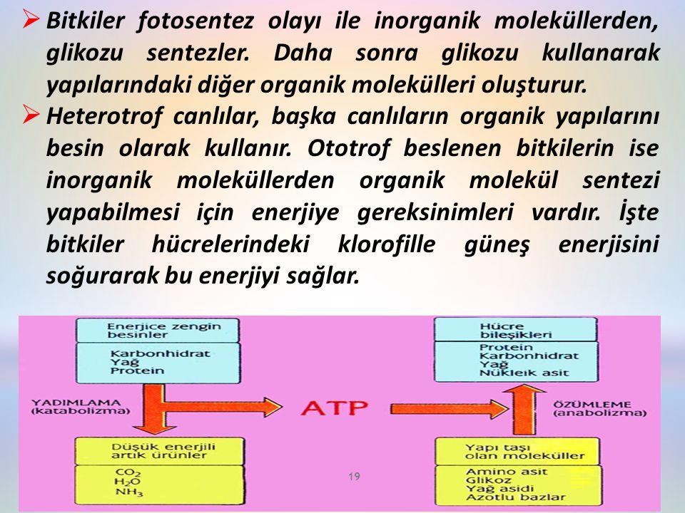  Bitkiler fotosentez olayı ile inorganik moleküllerden, glikozu sentezler. Daha sonra glikozu kullanarak yapılarındaki diğer organik molekülleri oluş