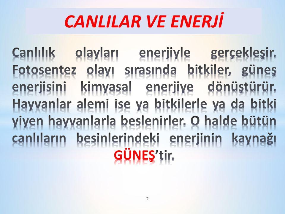 CANLILAR VE ENERJİ 2