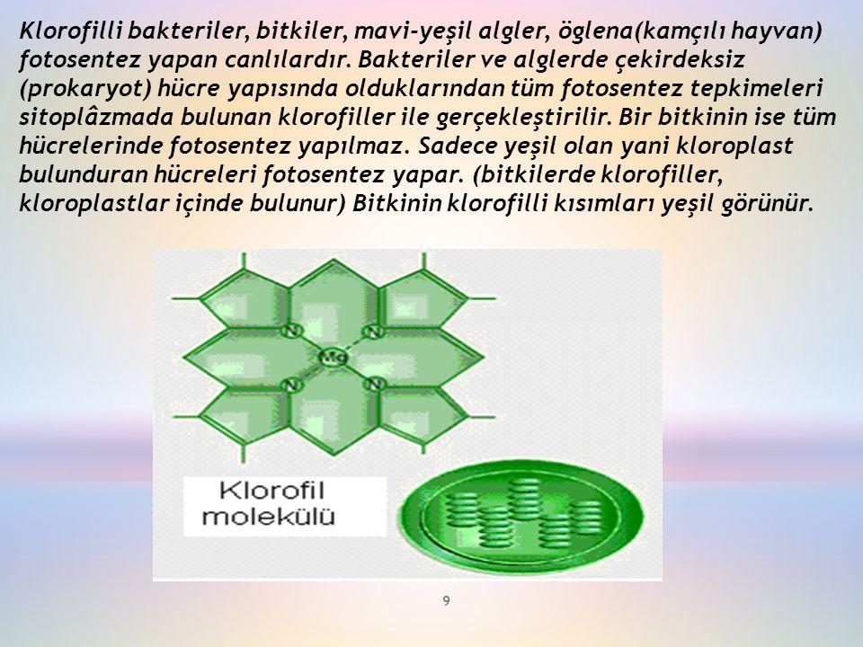 Klorofilli bakteriler, bitkiler, mavi-yeşil algler, öglena(kamçılı hayvan) fotosentez yapan canlılardır. Bakteriler ve alglerde çekirdeksiz (prokaryot