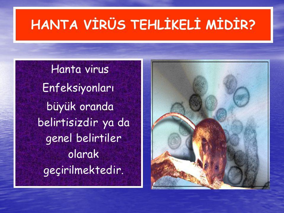 HANTA VİRÜS TEHLİKELİ MİDİR? Hanta virus Enfeksiyonları büyük oranda belirtisizdir ya da genel belirtiler olarak geçirilmektedir.