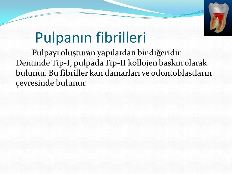 Pulpanın fibrilleri Pulpayı oluşturan yapılardan bir diğeridir. Dentinde Tip-I, pulpada Tip-II kollojen baskın olarak bulunur. Bu fibriller kan damarl