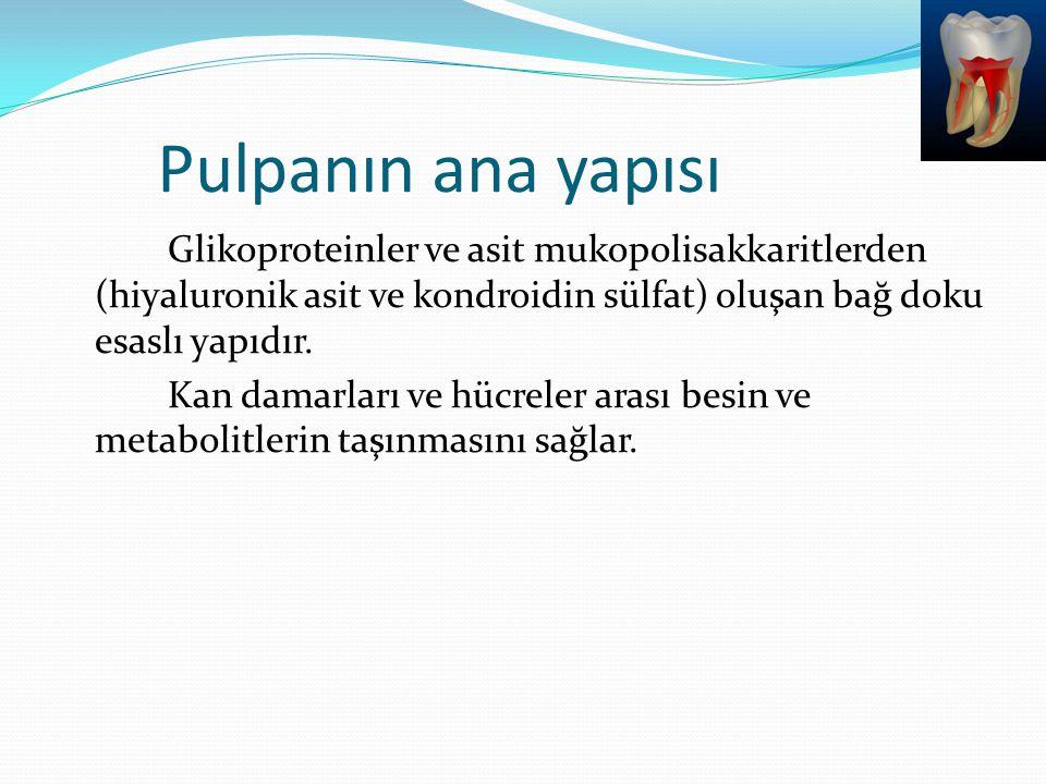 Pulpanın ana yapısı Glikoproteinler ve asit mukopolisakkaritlerden (hiyaluronik asit ve kondroidin sülfat) oluşan bağ doku esaslı yapıdır. Kan damarla