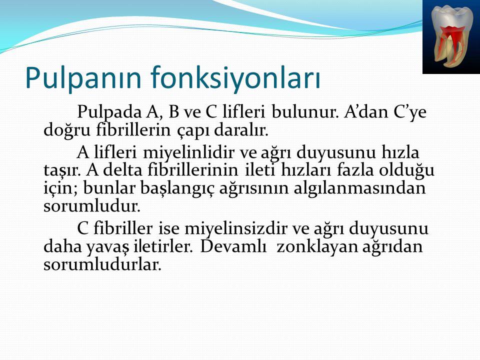 Pulpanın fonksiyonları Pulpada A, B ve C lifleri bulunur. A'dan C'ye doğru fibrillerin çapı daralır. A lifleri miyelinlidir ve ağrı duyusunu hızla taş