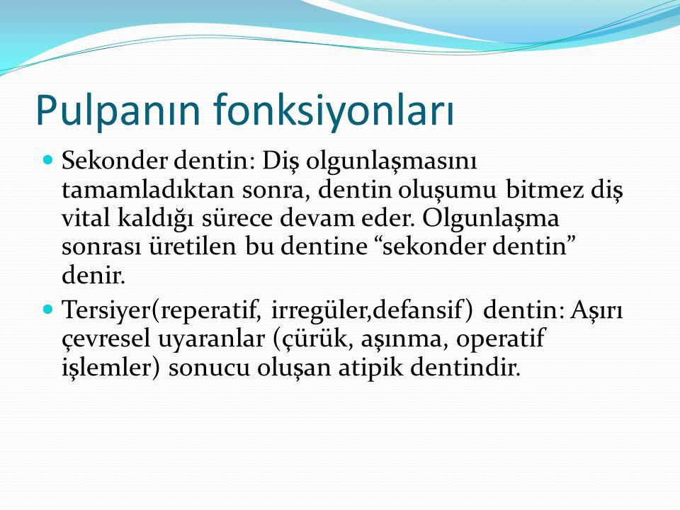 Pulpanın fonksiyonları Sekonder dentin: Diş olgunlaşmasını tamamladıktan sonra, dentin oluşumu bitmez diş vital kaldığı sürece devam eder. Olgunlaşma