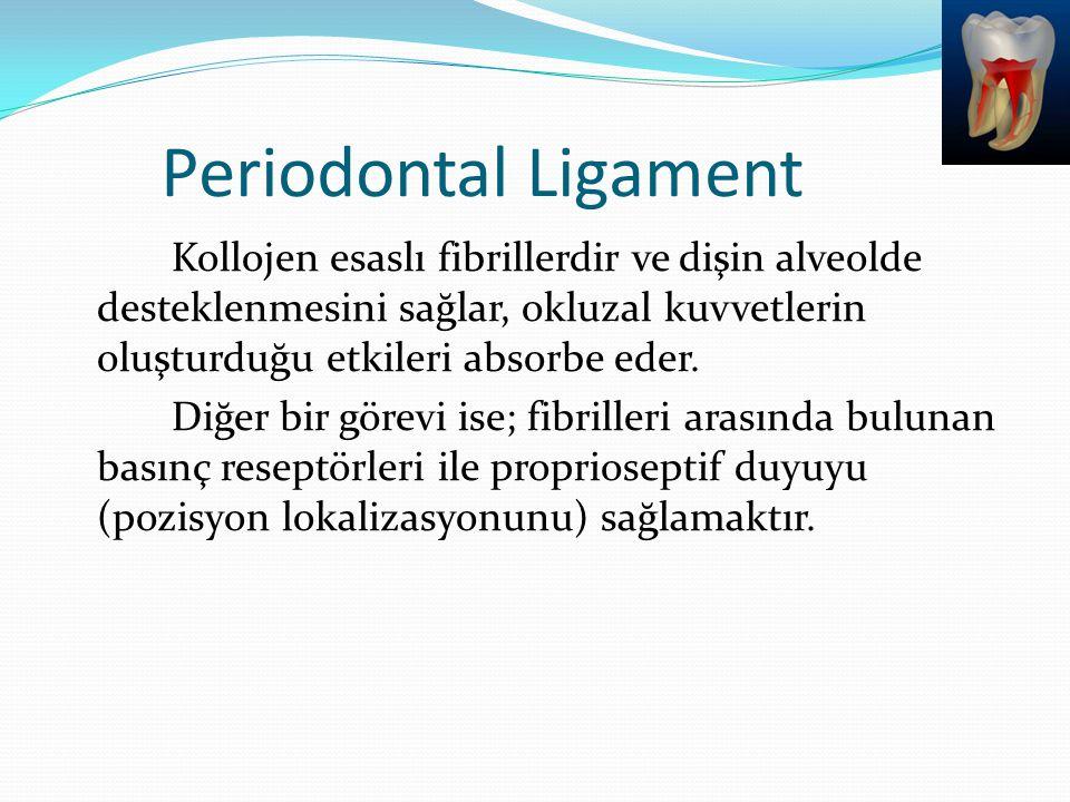 Periodontal Ligament Kollojen esaslı fibrillerdir ve dişin alveolde desteklenmesini sağlar, okluzal kuvvetlerin oluşturduğu etkileri absorbe eder. Diğ