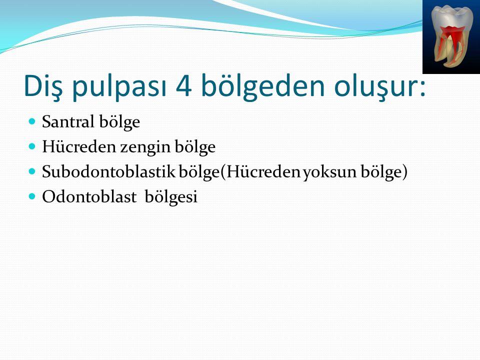 Diş pulpası 4 bölgeden oluşur: Santral bölge Hücreden zengin bölge Subodontoblastik bölge(Hücreden yoksun bölge) Odontoblast bölgesi