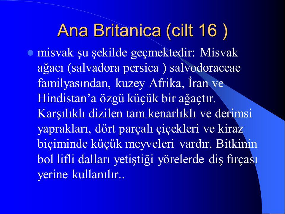 Ana Britanica (cilt 16 ) Misvak adı verilen bu dalların temizleyici etkisi liflerin sürtünmesinden olduğu kadar bileşiminde bulunan antiseptik ve temizleyici özellikteki maddelerden de kaynaklanır.