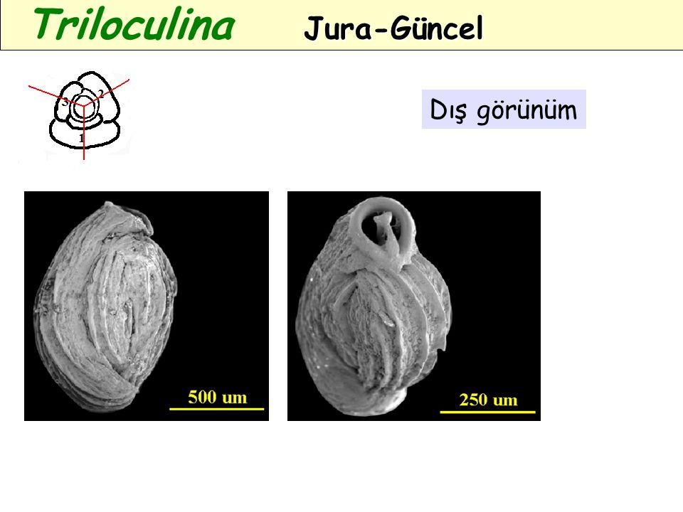 Dış görünüm Jura-Güncel Triloculina Jura-Güncel