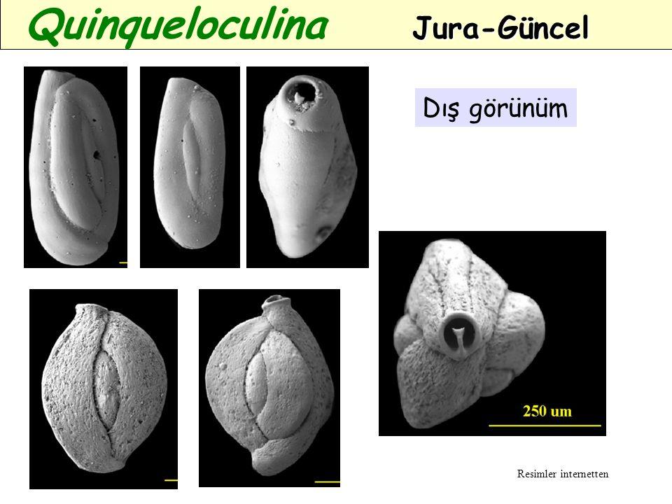 Dış görünüm Jura-Güncel Quinqueloculina Jura-Güncel Resimler internetten
