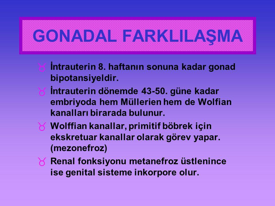 _İntrauterin 8. haftanın sonuna kadar gonad bipotansiyeldir. _İntrauterin dönemde 43-50. güne kadar embriyoda hem Müllerien hem de Wolfian kanalları b