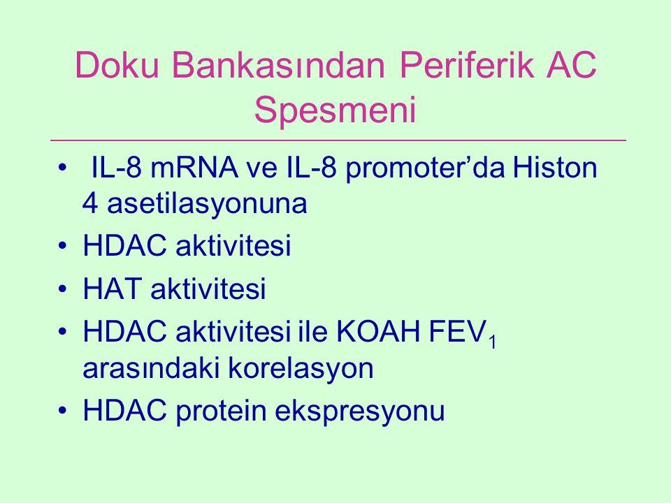 Doku Bankasından Periferik AC Spesmeni IL-8 mRNA ve IL-8 promoter'da Histon 4 asetilasyonuna HDAC aktivitesi HAT aktivitesi HDAC aktivitesi ile KOAH F