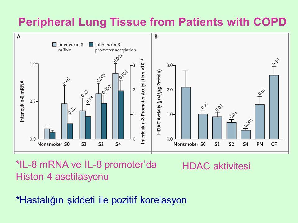 *IL-8 mRNA ve IL-8 promoter'da Histon 4 asetilasyonu *Hastalığın şiddeti ile pozitif korelasyon HDAC aktivitesi Peripheral Lung Tissue from Patients w