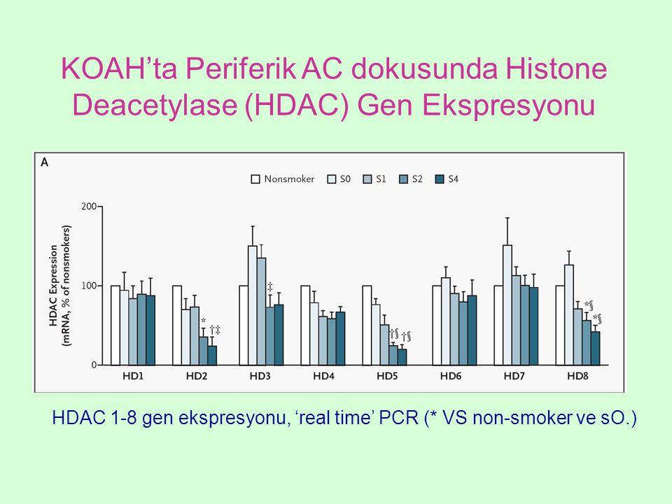 KOAH'ta Periferik AC dokusunda Histone Deacetylase (HDAC) Gen Ekspresyonu HDAC 1-8 gen ekspresyonu, 'real time' PCR (* VS non-smoker ve sO.)