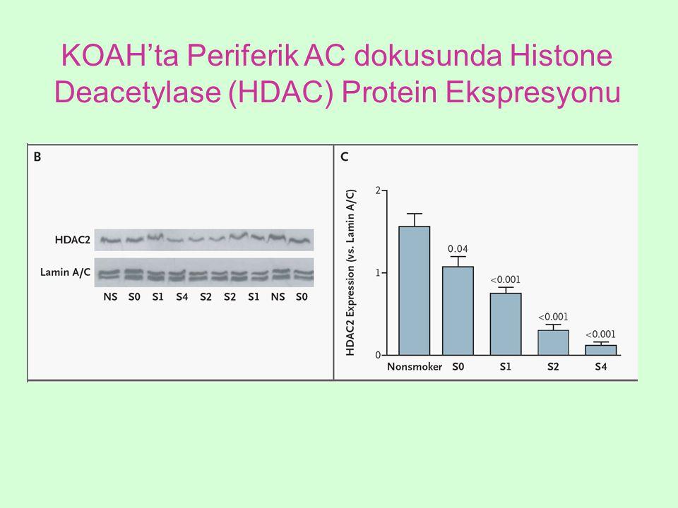 KOAH'ta Periferik AC dokusunda Histone Deacetylase (HDAC) Protein Ekspresyonu