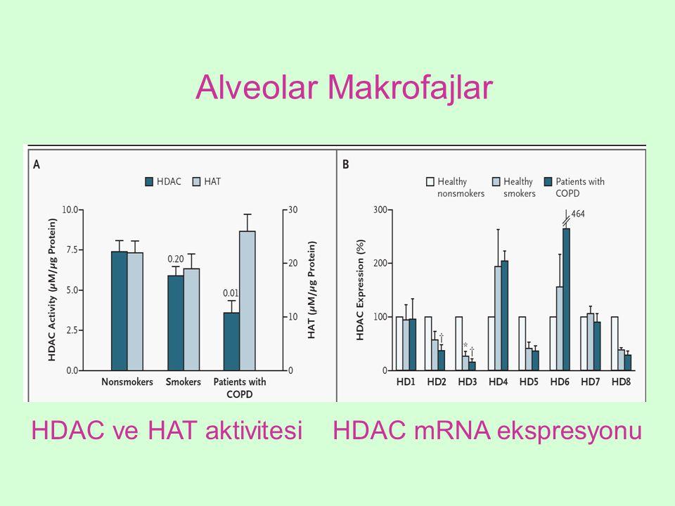 Alveolar Makrofajlar HDAC ve HAT aktivitesiHDAC mRNA ekspresyonu