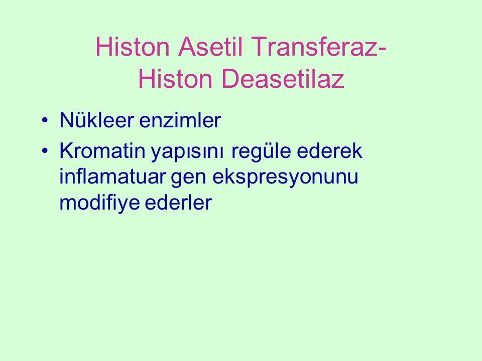 Histon Asetil Transferaz- Histon Deasetilaz Nükleer enzimler Kromatin yapısını regüle ederek inflamatuar gen ekspresyonunu modifiye ederler