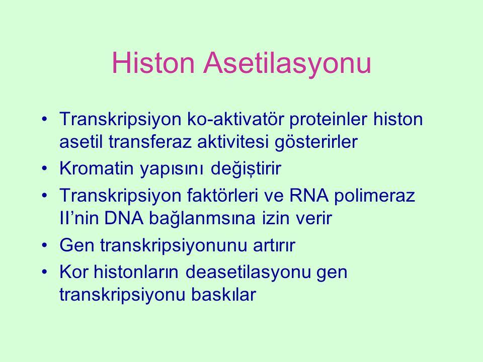 Histon Asetilasyonu Transkripsiyon ko-aktivatör proteinler histon asetil transferaz aktivitesi gösterirler Kromatin yapısını değiştirir Transkripsiyon