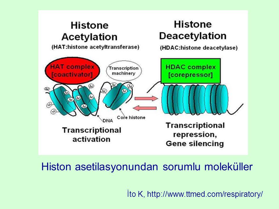 Histon asetilasyonundan sorumlu moleküller İto K, http://www.ttmed.com/respiratory/
