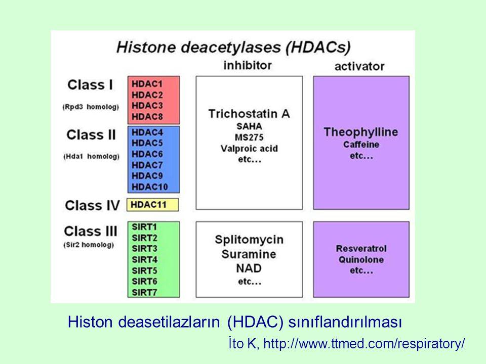 Histon deasetilazların (HDAC) sınıflandırılması İto K, http://www.ttmed.com/respiratory/