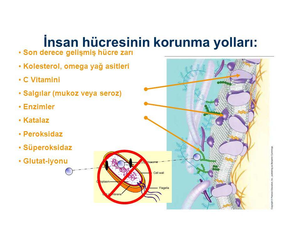 Son derece gelişmiş hücre zarı Kolesterol, omega yağ asitleri C Vitamini Salgılar (mukoz veya seroz) Enzimler Katalaz Peroksidaz Süperoksidaz Glutat-i