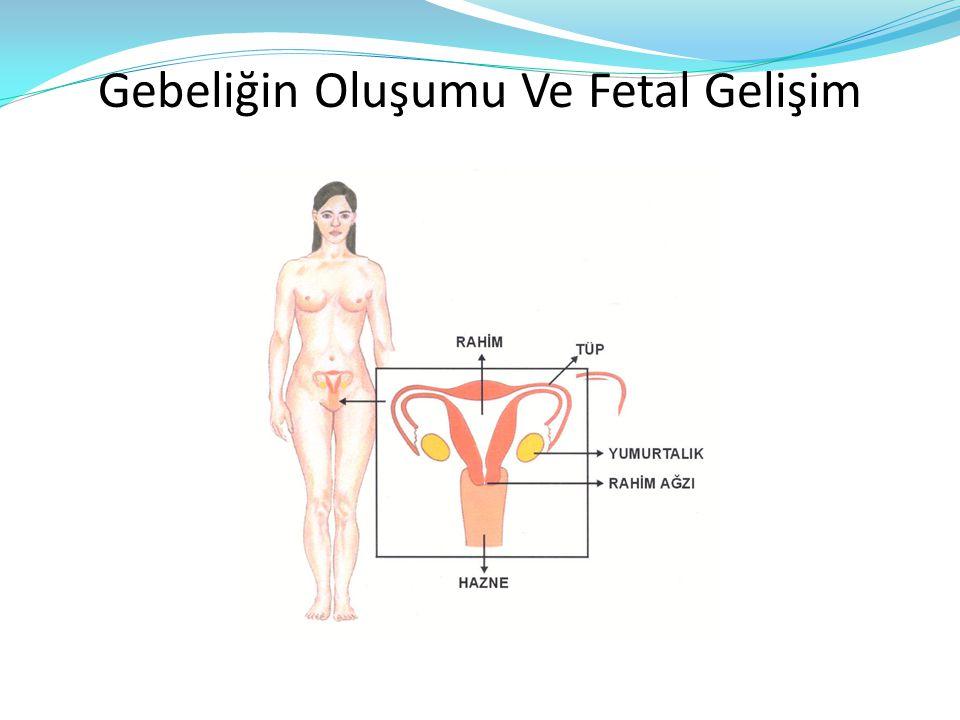 Gebeliğin Oluşumu Ve Fetal Gelişim