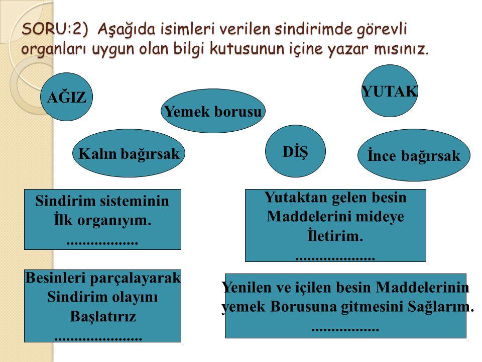 SORU:2) Aşağıda isimleri verilen sindirimde görevli organları uygun olan bilgi kutusunun içine yazar mısınız.
