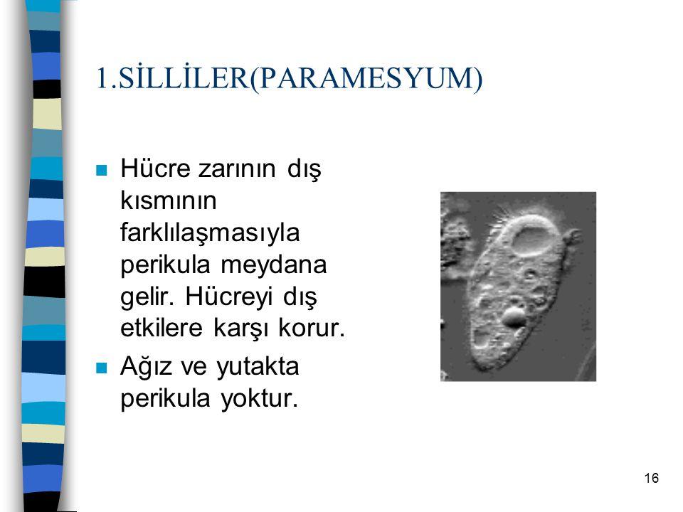 15 B.ÖKARYOTLAR