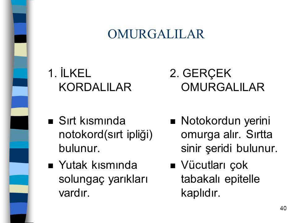 39 6.EKLEMBACAKLILAR n Açık dolaşım görülür. n Üyeleri eklemdir. n Vücutları kitin ile örtülüdür.(Dış iskelet) n Sindirim sistemleri gelişmiştir. n Ka