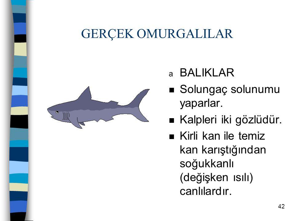 41 1. İLKEL KORDALILAR n Anfiyoksus ve tulumlu hayvan örnektir. 2. GERÇEK OMURGALILAR n Ayrı eşeylidir. n Kapalı dolaşım görülür. n Holozoik beslenirl