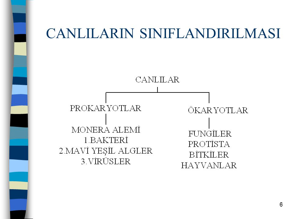 5 2 DOĞAL(FİLOGENETİK) SINIFLANDIRMA: Canlıların orijin(köken) bağlantılarına (homolog organlarına), akrabalık derecelerine, embriyonik gelişimlerine, evrim basamaklarına, protein benzerliklerine, fizyolojilerine dayanarak yapılan sınıflandırmadır.( Homolog Organ:Orijinleri aynı, görevleri farklı olabilen organlardır.