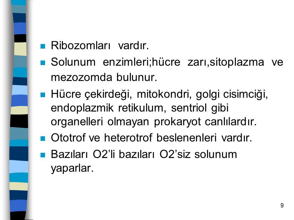 9 n Ribozomları vardır.n Solunum enzimleri;hücre zarı,sitoplazma ve mezozomda bulunur.