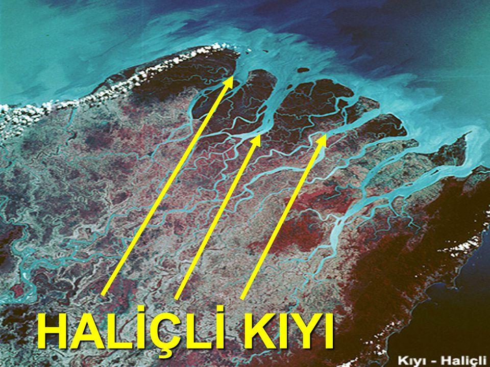 HALİÇ: Gel-git genliğinin fazla olduğu OKYANUS kıyılarında görülür.