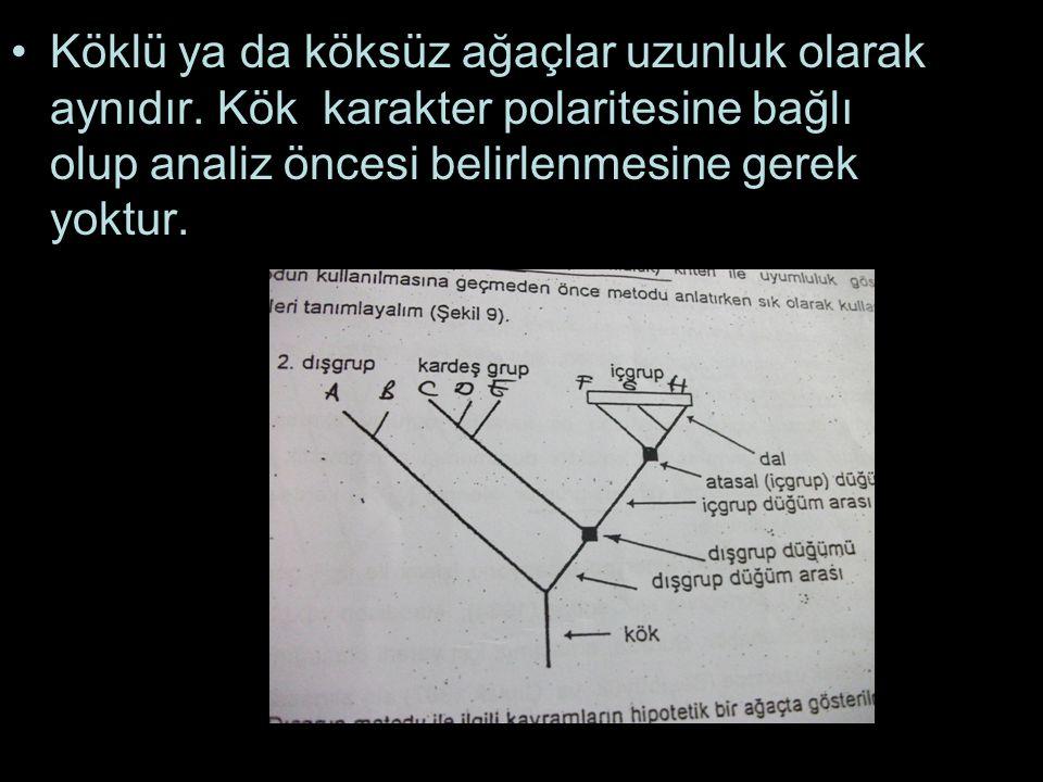 Köklü ya da köksüz ağaçlar uzunluk olarak aynıdır. Kök karakter polaritesine bağlı olup analiz öncesi belirlenmesine gerek yoktur.